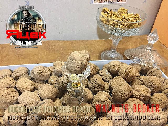 Саженцы грецкого ореха сорт Яцек, 0985674877, 0957351986, Walnuts Broker