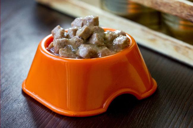 Czy można karmić psa tylko mokrą karmą?