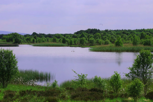 Lake at Lough Boora Discovery Park