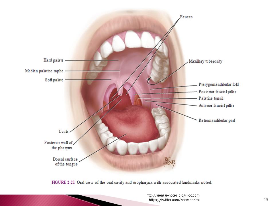 Dental Notes: Inferior Alveolar Nerve Block NOTES