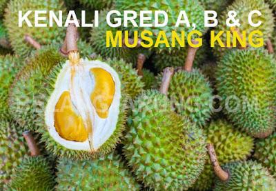 Gred Dan Ciri Fizikal Musang King Durian Kunyit