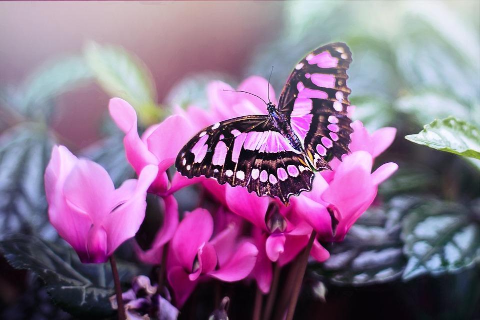 Simbolismo Della Farfalla Significato E Messaggi