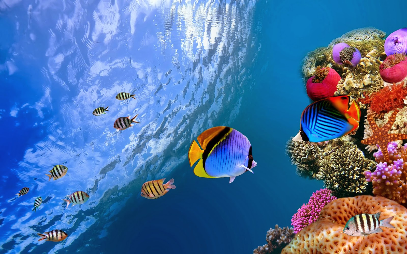 Fish-best-photo-of-undersea-creatures-HD-collection.jpg