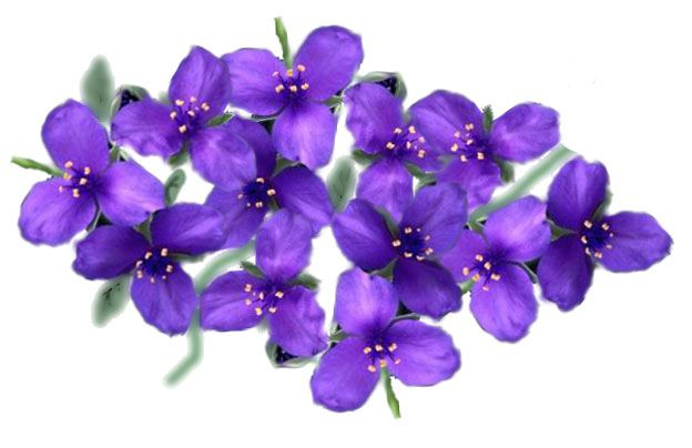 Imagenes Antiguas Flores Para Imprimir Imagenes Y Dibujos