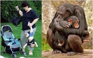 Coole Tierbilder - Lustiger Vergleich Menschen und Affen Familie