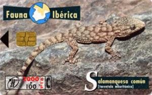 Tarjeta telefónica Salamanquesa común (Tarentola mauritanica)