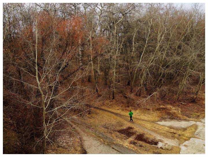 topola drzewa ścieżka jogging wiosna