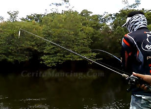 Mancing Casting Strike Ikan Barramundi