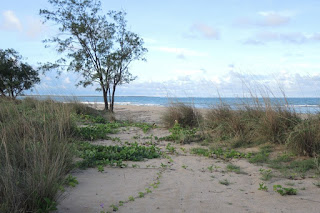 Coastal grassland hermit crab habitat