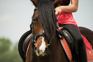 Bay horse being ridden by a rider wearing a red top
