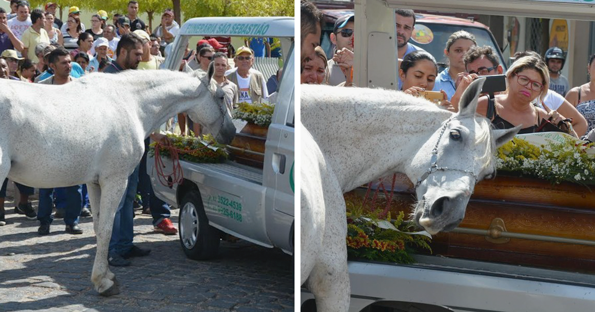Heart-Melting Pictures Of Grieving Horse Smelling His Owner's Casket And Breaking Down At Funeral
