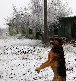 Rambo catches a snow ball in his mouth