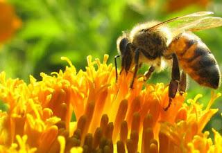 1114 - Las abejas (y el ser humano) sí están en peligro - El Apicultor Español: Actitud y Aptitud Apícola