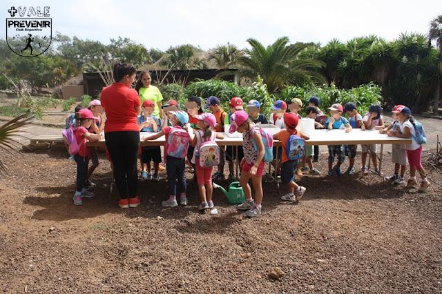 plantar semilla girasol