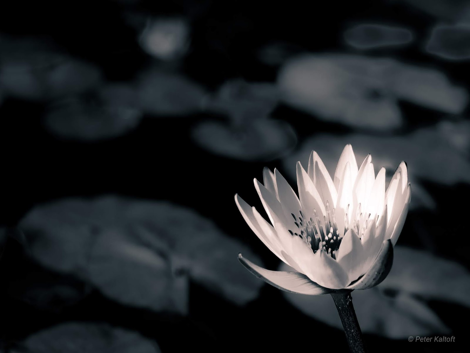 A flower highlighted on a dark background.