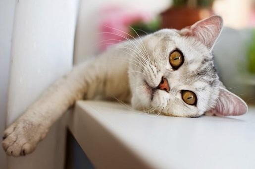 Choroby stawów u kota