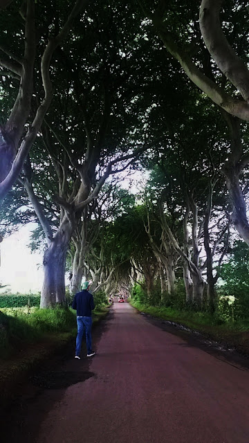 View up the road of the dark hedges