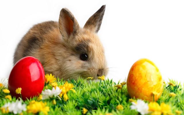 Easter Egg Day Images Download