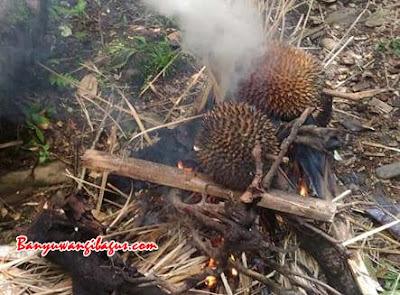 Durian bakar Songgon.