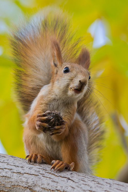 Squirrel: 'Sorry?! I didn't catch what you said! Please can you repeat it?'