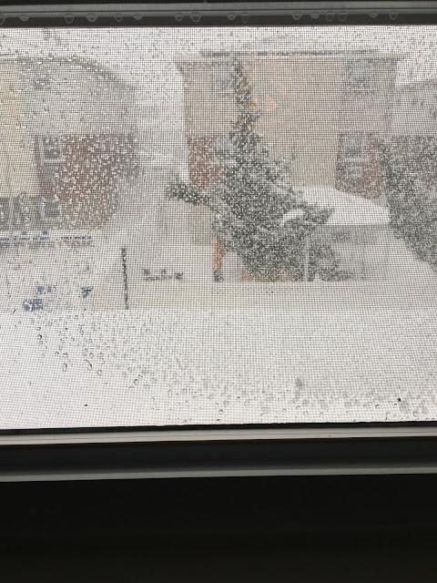 snowday-snow