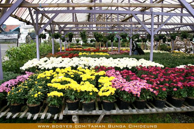 wisata belanja bunga di cihideung