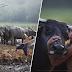Kisah DiSebalik Gambar Budak Dan Kerbau Yang Viral