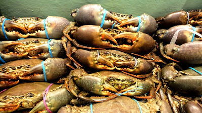 Mud Crab Export from Vietnam with High Demand
