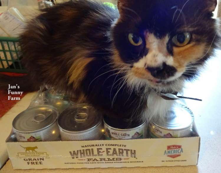 Whole Earth Farms Cat Food Review