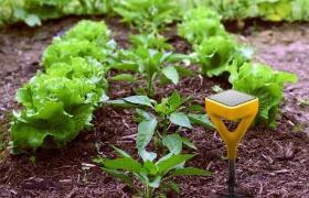 Solar plant health sensor