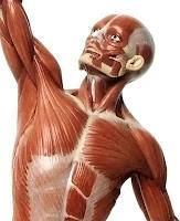 Kolunu havaya kaldırmış 3D bir adamın belden üstteki vücut kasları