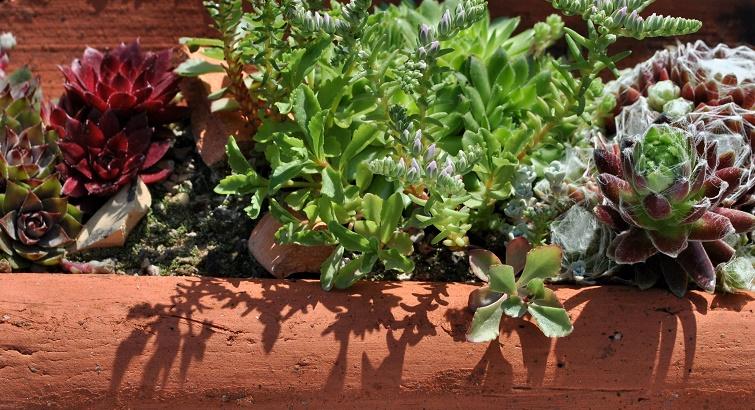 Terrakotta im Garten