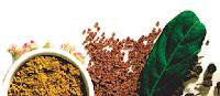 增強免疫力健康食品, 提高免疫力的方法, 增強免疫力的方法,薑黃素,薑根,薑黃