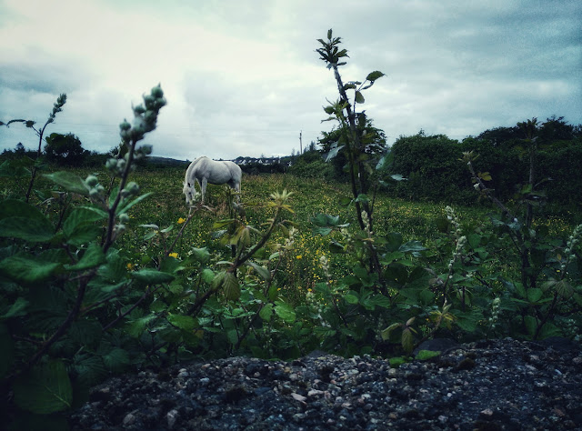 white horse in a beautiful green field