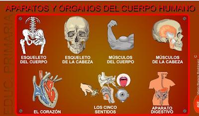 http://www.eltanquematematico.es/cuerpohumano/chumano_p.html