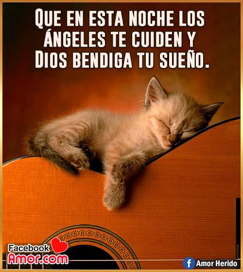 imágenes de buenas noches gato