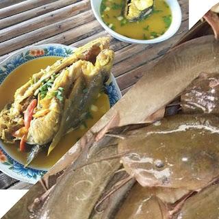 KhasiatvManfaat Ikan Sembilang Untuk Kesehatan Tubuh Dan Otak Dan ibu hamil