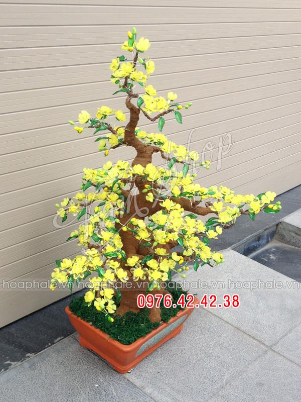 Goc bonsai mai dao o Thanh Thai