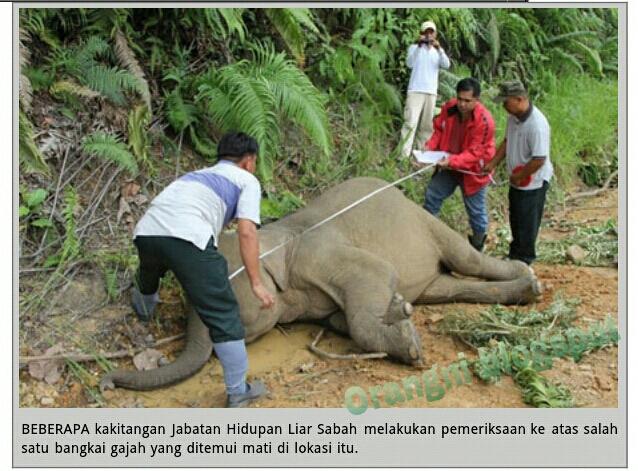 Orang Ni 10 Ekor Gajah Mati Kat Negeri Umno Apa Hal