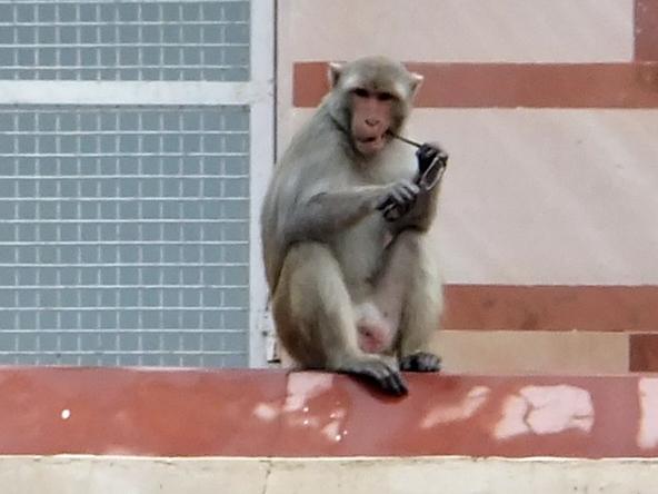 обезьяна с очками