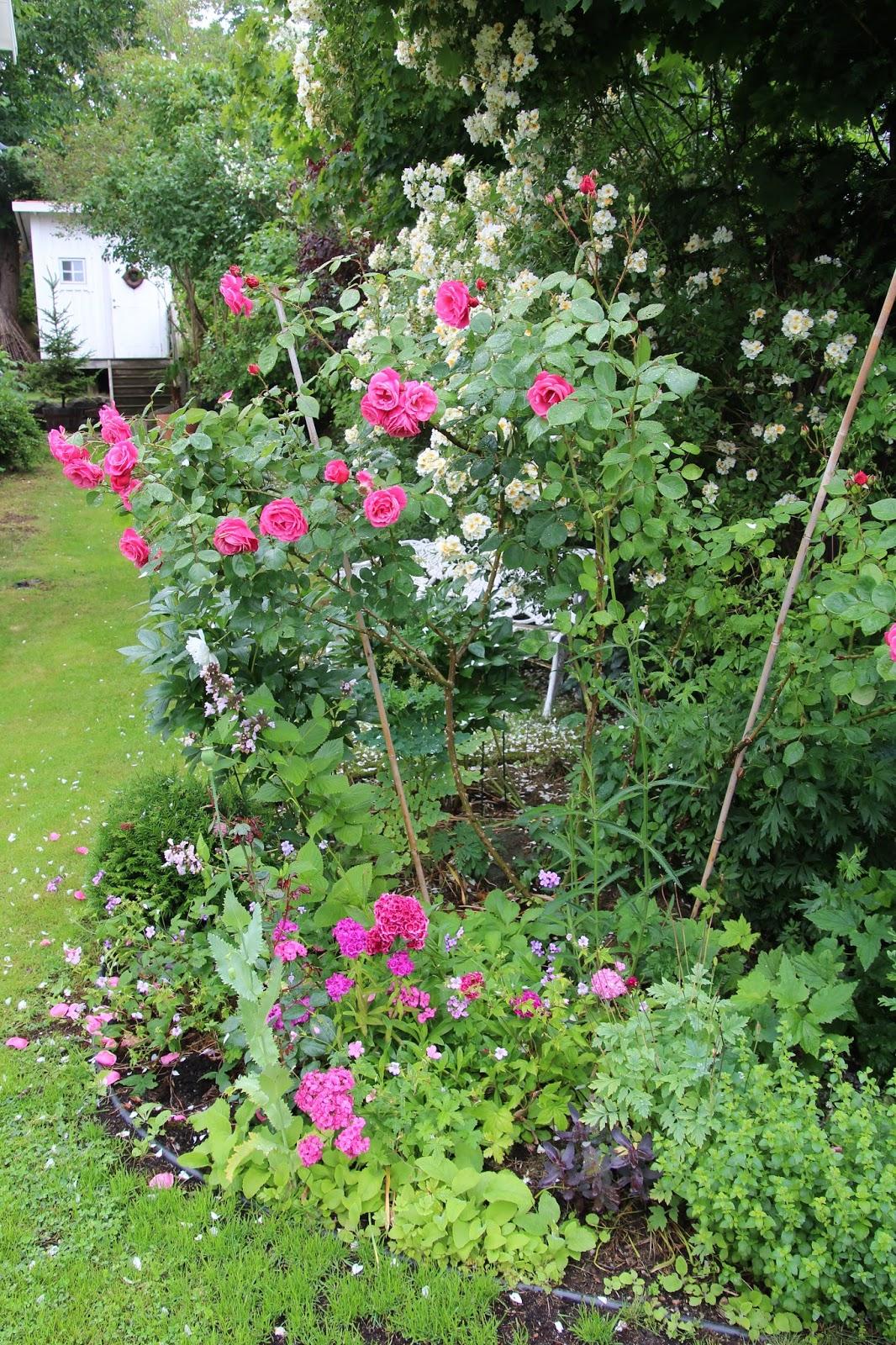 trädgårdsblogg Hon som talar med blommor