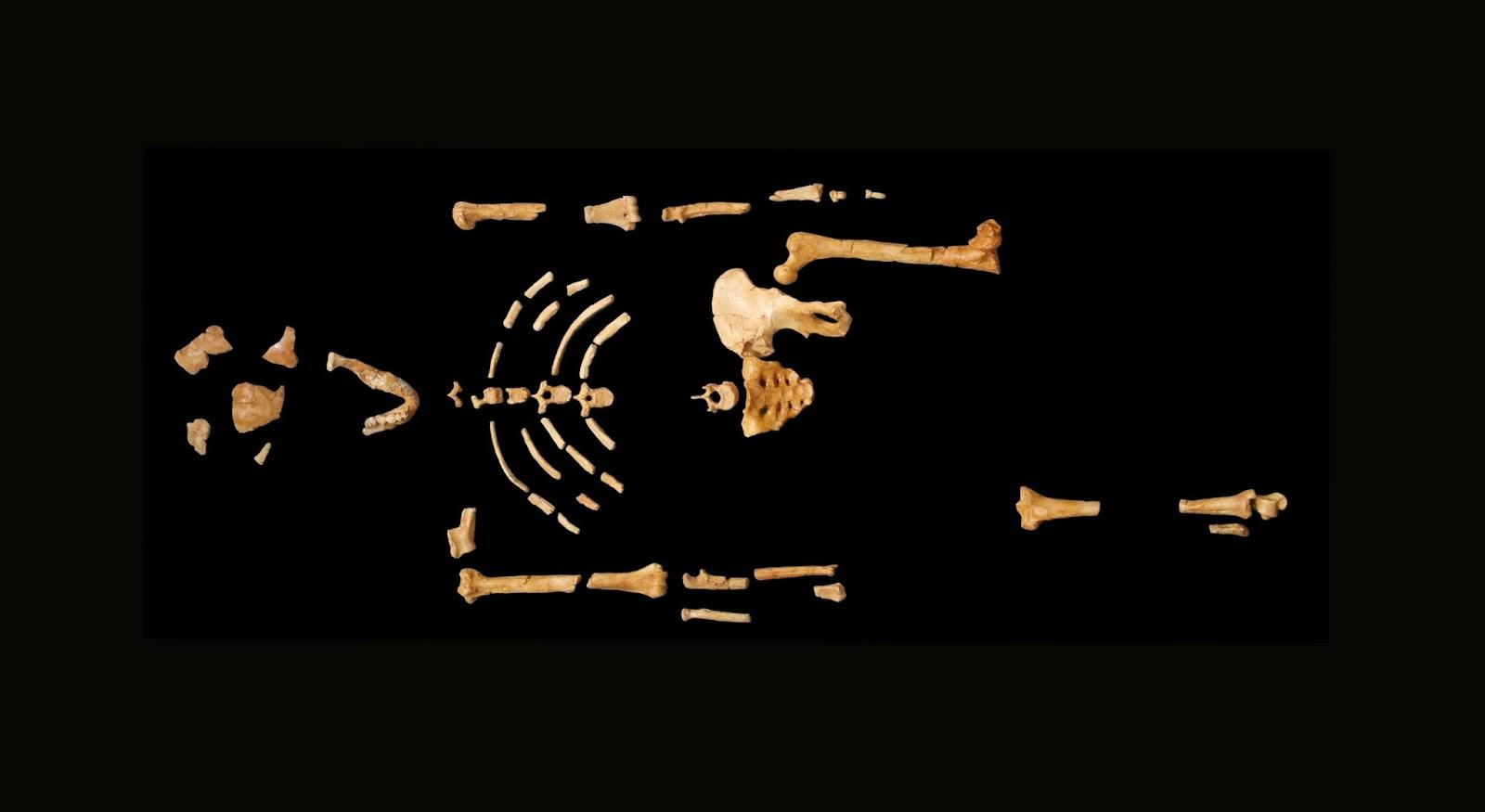 Osteotecnia promueve el aprendizaje de la teoria evolutiva ...