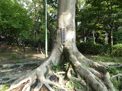 佐太天神宮 子宝の樹