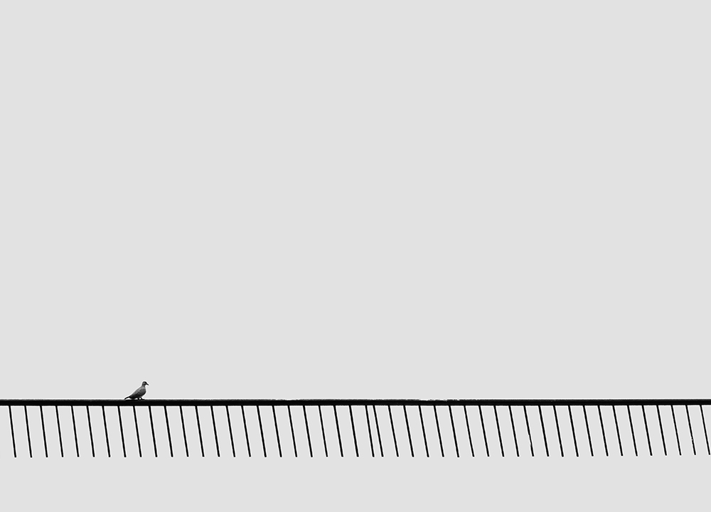 A black and white Minimalist Photo of a Bird walking on the railing of a terrace.