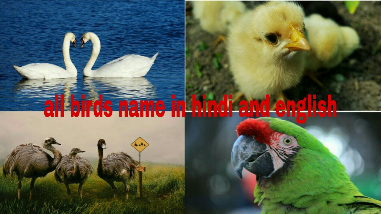 All Birds name in hindi and english - Mix Vocabulary