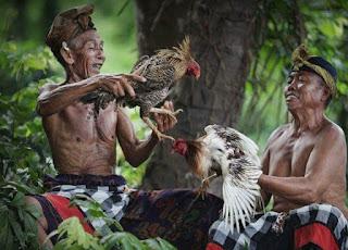 Carcan Siap dan  Lontar Pengayam-ayaman dalam Tajen Bali