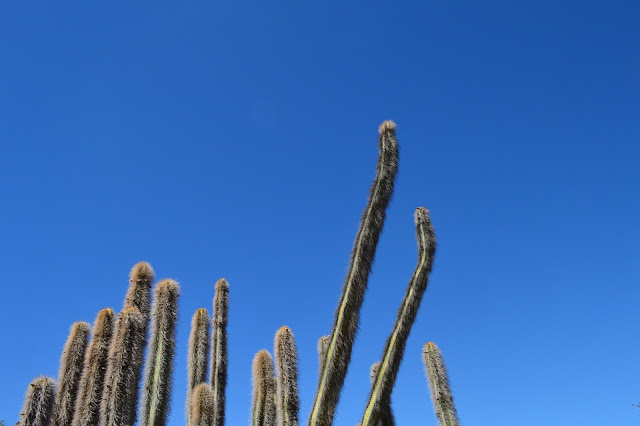 Desert Botanical Garden in Phoenix, Arizona
