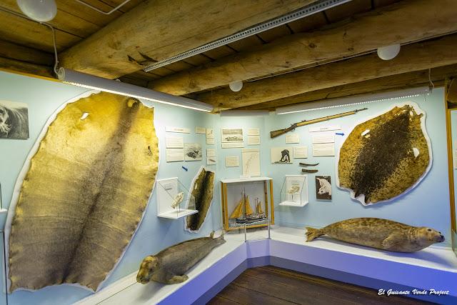 Focas en el Museo Polar Tromsø - Noruega, por El Guisante Verde Project