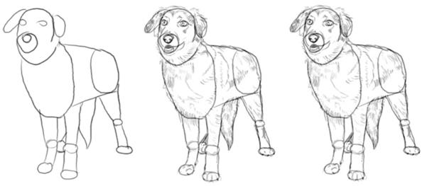 köpek resmi çizmek
