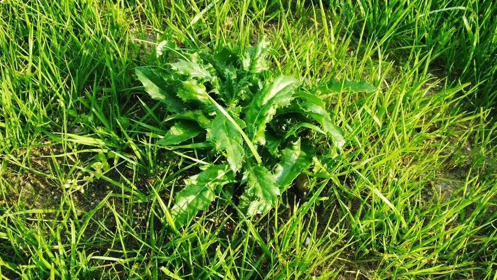 Dwa Sprawdzone Sposoby Na Piękny Trawnik W 14 Dni